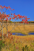 Scarborough Marsh, Eastern Trail, Scarborough, Maine, USA