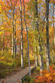Laird Norton Trail, The Wells Reserve at Laudholm, Wells, Maine, USA