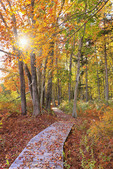 Muskie Trail, The Wells Reserve at Laudholm, Wells, Maine, USA