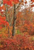 Sawmill Ridge, Appalachian Trail, Shenandoah National Park, Virginia, USA
