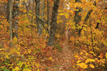 Turk Mountain Gap, Appalachian Trail, Shenandoah National Park, Virginia, USA