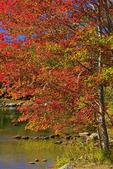 Tunk Lake, Maine Public Reserve Land, Cherryfield, Maine, USA
