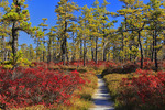 Saco Heath Preserve, The Nature Conservancy, Saco, Maine, USA