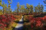 Saco Heath Preserve, The Nature Conservancy, Saco, Maine, USA