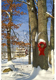 Christmas Decoration, Newport, Virginia