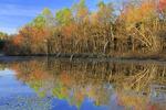 Sloans Crossing Pond, Mammoth Cave National Park, Park City, Kentucky, USA