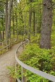 Rachel Carson National Wildlife Refuge, Wells, Maine, USA