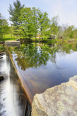 Rhodora, Chocorua Lake, Chocorua, New Hampshire, USA Chocorua Pond, Chocorua, New Hampshire, USA