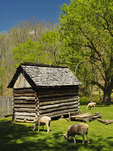 Sheep and Garden Crib, Homeplace, Land Between The Lakes National Recreation Area, Dover, Tennessee, USA
