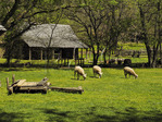 Sheep and Tool Barn, Homeplace, Land Between The Lakes National Recreation Area, Dover, Tennessee, USA