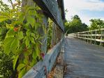 Wautoga Trestle 12, Virginia Creeper Trail, Abingdon, Virginia, USA