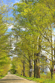 North Road, Waitesfield, Vermont, USA
