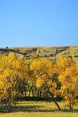 Wildlife Loop Road, Custer State Park, Black Hills, South Dakota, USA