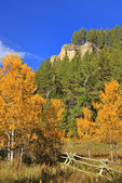 Along Roughlock Falls Road, Spearfish Canyon, Black Hills, Savoy, South Dakota, USA