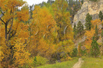 Iron Creek Trail, Spearfish Canyon, Black Hills, Savoy, South Dakota, USA