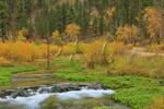 Little Spearfish Creek, Spearfish Canyon, Black Hills, Savoy, South Dakota, USA