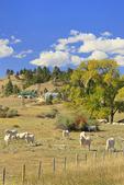 Ranch, Aladdin, Wyoming, USA