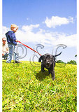 Boy and His Curious Lab, Loudoun County, Virginia