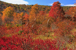 Graveyard Ridge Trail, Graveyard Fields, Blue Ridge Parkway, North Carolina, USA
