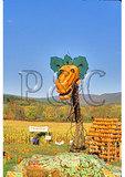 Pumpkin Dragon at The Apple Barn, Bennington, Vermont