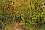 Bradley Fork Trail, Great Smoky Mountains National Park, North Carolina, USA