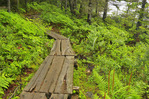 Boardwalk, Jordan Pond Shore Trail, Acadia National Park, Maine, USA