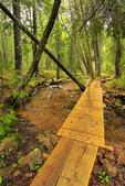 Jordan Stream Trail, Acadia National Park, Maine, USA