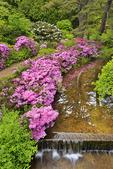 Asticou Gardens, Northeast Harbor, Mount Desert Island, Maine, USA