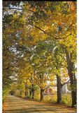 Farm thru the trees along North Road, Waitesfield, Vermont