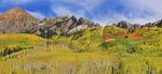 Aspens, Kebler Pass, Crested Butte, Colorado, USA