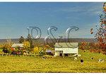 Farm, Cavetown, Maryland