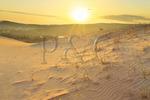 Heron, Dunes Hiking Trail, Sleeping Bear Dunes National Lakeshore, Empire, Michigan, USA