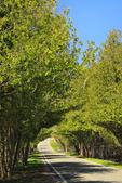 Tunnel of Trees, Harbor Springs, Michigan, USA