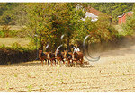 Amish farmer, Ryceville, Maryland