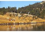 Llama Trekking, Island Lake, Beartooth Highway, Red Lodge, Montana