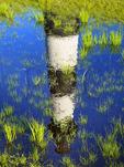 Rain Pool, Bodie Island Lighthouse, Cape Hatteras National Seashore, North Carolina, USA