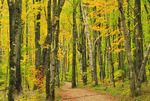 Miners Falls Trail, Pictured Rocks National Lakeshore, Munising, Michigan, USA
