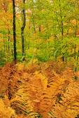 Ferns, Pictured Rocks National Lakeshore, Munising, Michigan, USA