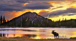 Bull Moose, Sunrise, Sprague Lake, Sprague Lake Trail, Rocky Mountain National Park, Estes, Colorado, USA