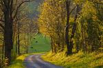 Dirt Road near Middlebrook in Shenandoah Valley, Virginia, USA