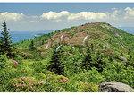 Rhododendron bloom, Grassy Ridge Bald, Roan Mountain, Tennessee / North Carolina