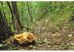 Hen Of The Woods along the Appalachian Trail in Shenandoah National Park