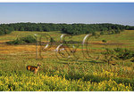 Deer and Ranger Walk, Shenandoah National Park, Virginia