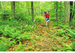 Kennison Mountain Trail, Cranberry Wilderness, Mill Point, West Virginia