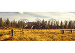 Photographers and Elk, Yellowstone National Park, Wyoming
