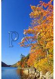 Along Jordan Pond Shore Trail, Acadia National Park, Maine