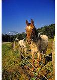 Horses near Linville Falls, Blue Ridge Parkway, Linville, North Carolina