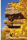 Maple Leaves and Log Barn, Humpback Rocks Farmstead, Blue Ridge Parkway, Virginia