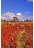 Big Meadows, Shenandoah National Park, Virginia