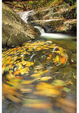 Falls on Hogcamp Branch, Shenandoah National Park, Virginia